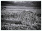 'Haybale' by Doug Ross